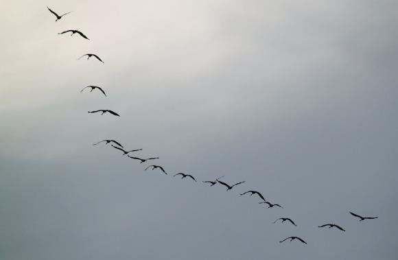cranes-534916_1280