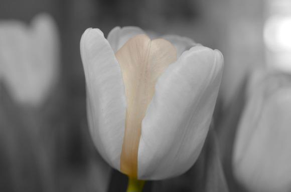 flower-144285_1280