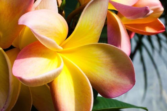 flower-789196_1280