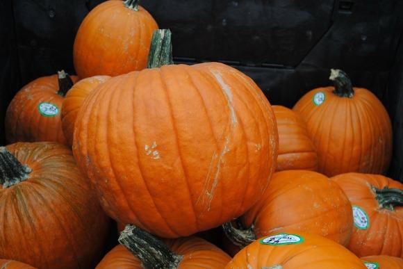 pumpkin-217254_1280